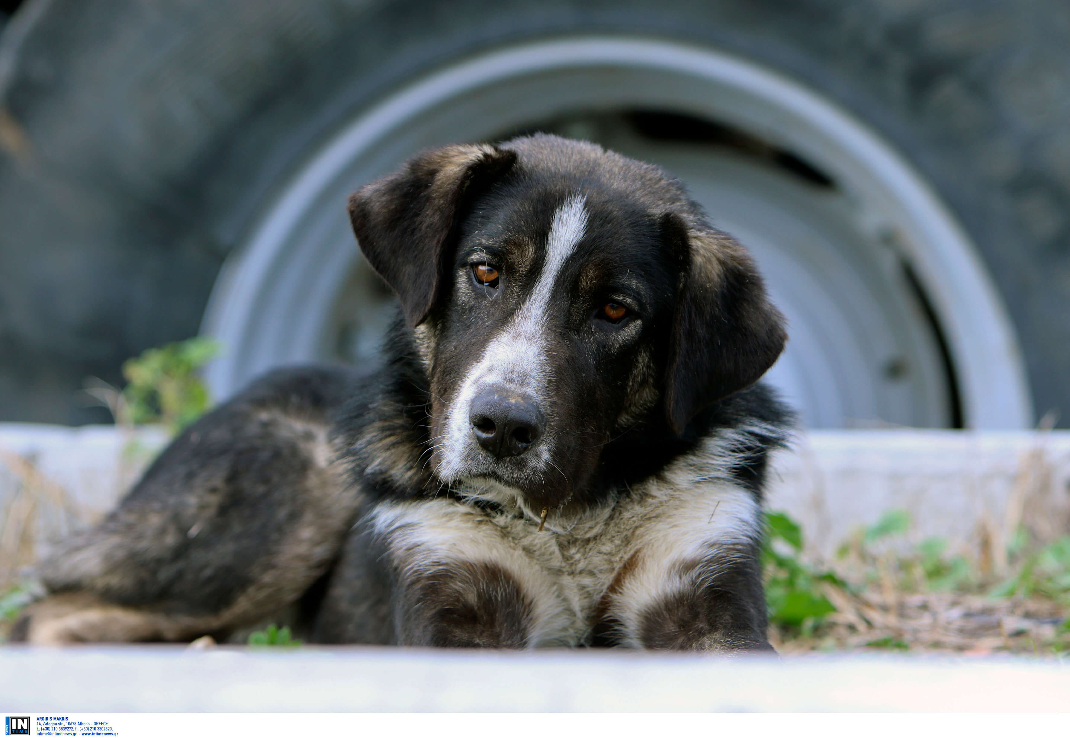 Συγκίνηση! Ανάπηρος σκύλος έσωσε παιδί που το έθαψαν ζωντανό σε χωράφι