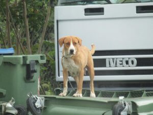 Θράκη: Το αλυσοδεμένο σκύλι που προκάλεσε θλίψη σε μικρούς και μεγάλους – Το ζώο μόνο και αβοήθητο [pics]
