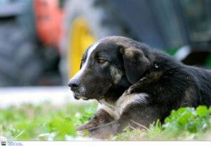 Κρήτη: Έπνιξαν σκύλο σε λίμνη – Οργή για τους δράστες που είναι ήδη γνωστοί!