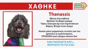 Ευρωεκλογές 2019: Ο Πάνος Καμμένος ψάχνει τον… Thanassis – video