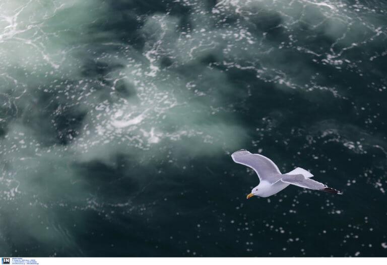 Τήνος: Κοίταξαν τη θάλασσα από ψηλά και το βλέμμα τους έπεσε πάνω σε αυτές τις σπάνιες εικόνες [pics]