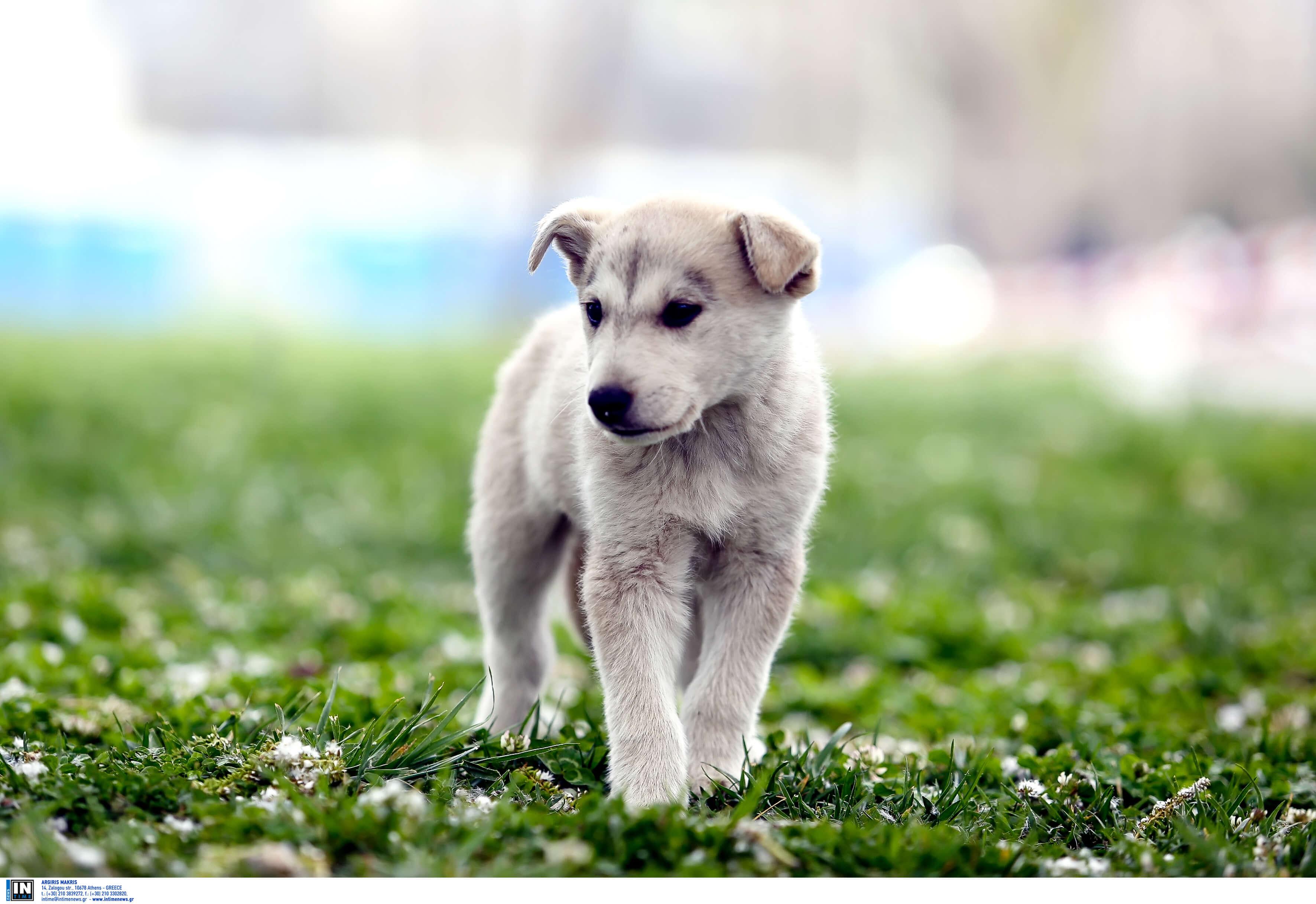 Προκαταρτική Διοικητική Εξέταση για πιθανές παραλείψεις αστυνομικών σε υπόθεση τραυματισμού σκύλου