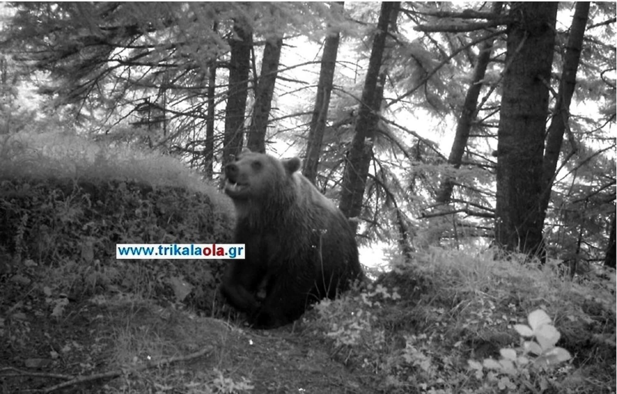 Πρωινή… λιγούρα! Αρκούδα επισκέφτηκε μελίσσια στα Τρίκαλα [pic]