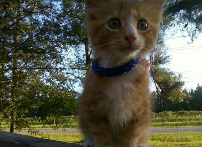 Τουρκία: Εργάτης διέσωσε γατάκι από πνιγμό, δίνοντάς του τις πρώτες βοήθειες