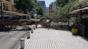 Έπεσε δέντρο δύο τόνων στο κέντρο της Θεσσαλονίκης!