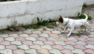 Καστοριά: Ο γενναίος Jack και ο απρόσκλητος «επισκέπτης»! [pics]
