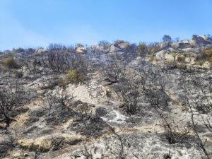 Φωτιά τώρα στο Καλαμίτσι Χαλκιδικής