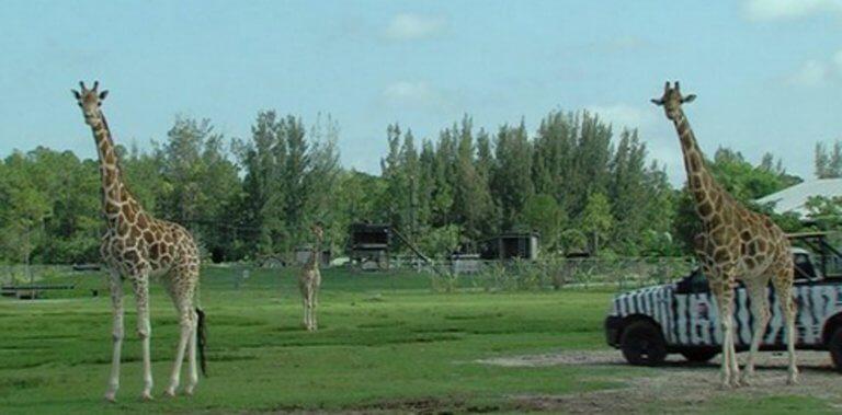 Φλόριντα: Τραγωδία στο ζωολογικό κήπο – Δύο καμηλοπαρδάλεις νεκρές από κεραυνό!