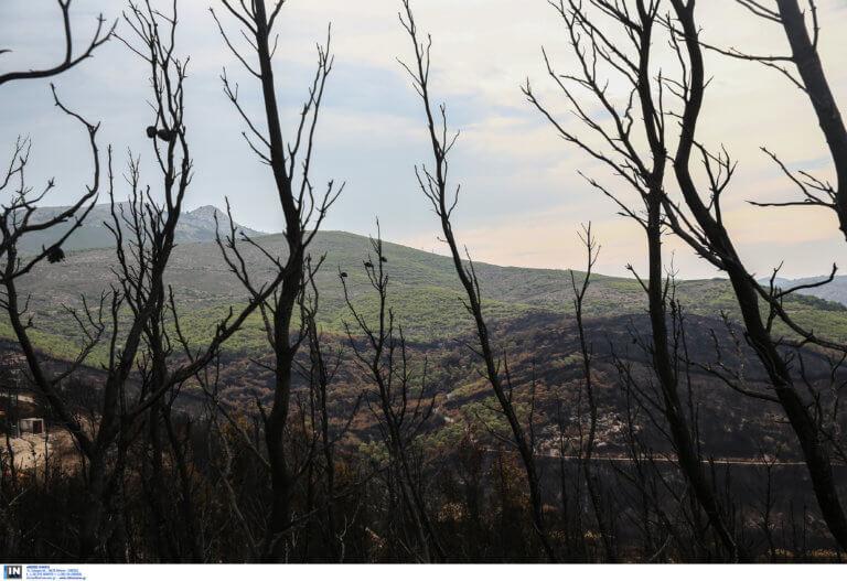 Νέος Βουτζάς: Βρήκε πτώμα στο καμένο του οικόπεδο