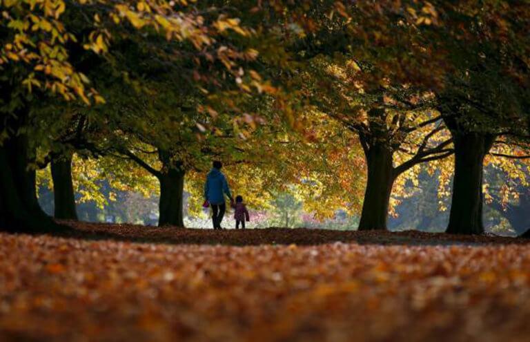 Πατάτε κι εσείς τα πεσμένα φύλλα στον δρόμο; Αυτή την χρήση τους δεν την είχατε φανταστεί [pics]