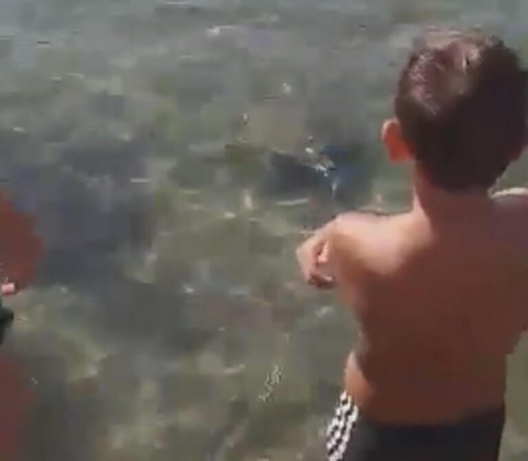 Σύρος: Απρόσμενος επισκέπτης σε παραλία – Μικροί και μεγάλοι μαζεύτηκαν στο ίδιο σημείο – video