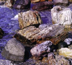 Λέσβος: Πήρε… αναμνηστικό από το απολιθωμένο δάσος!