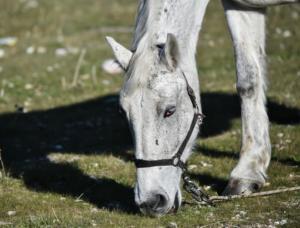 Θεσσαλονίκη: Άλογο… καλπάζει ελεύθερο στους δρόμους της πόλης
