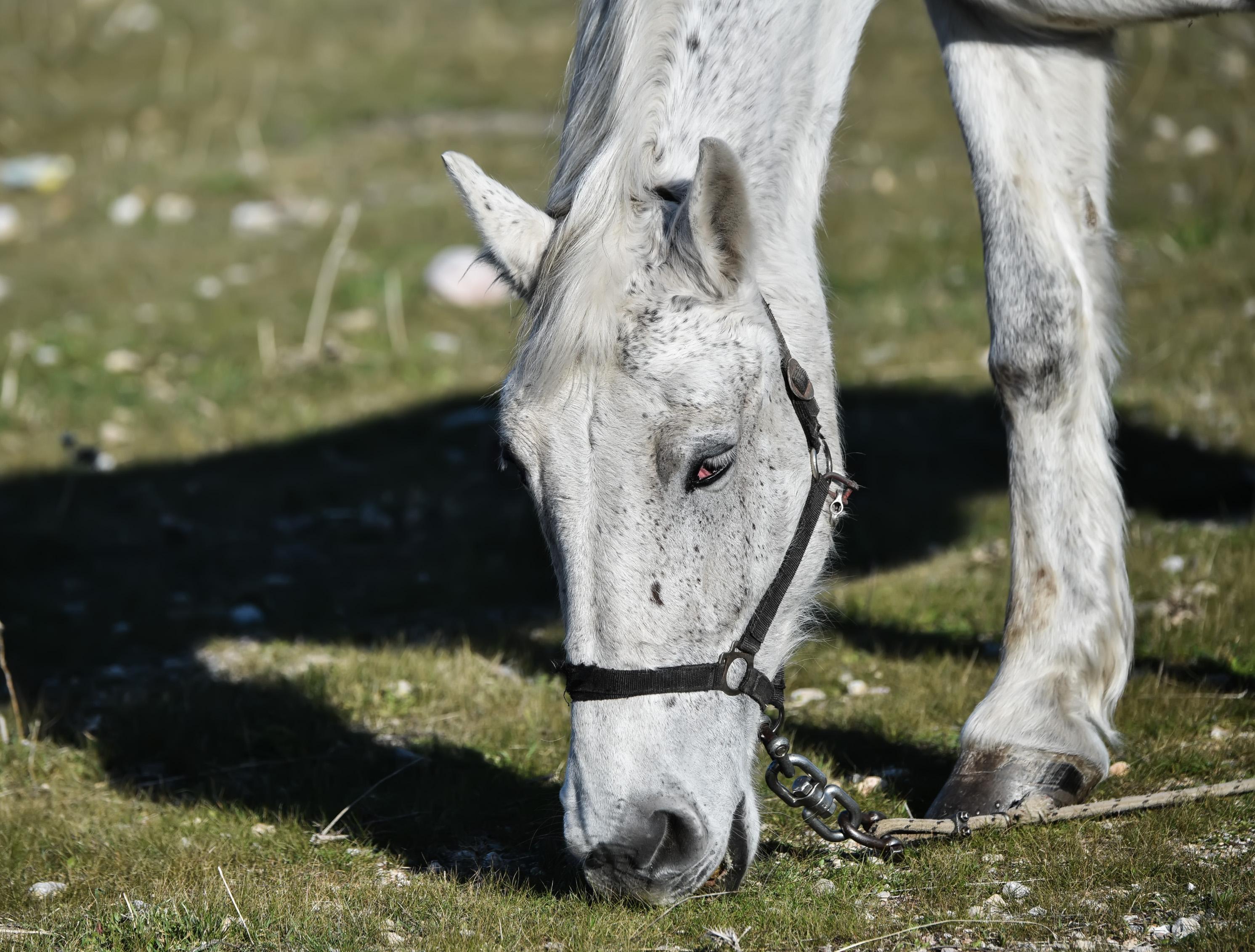 Άρτα: Κακοποίησαν και σκότωσαν με φρικτό τρόπο ένα πανέμορφο άλογο! Οργή για τη νέα κτηνωδία
