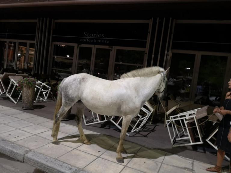 Αλεξανδρούπολη: Το πανέμοφο άσπρο άλογο που εμφανίστηκε ξαφνικά ολομόναχο στην παραλιακή [pics, video]