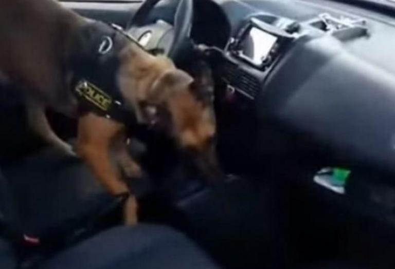Κιλκίς: O αστυνομικός σκύλος τους ανάγκασε να λύσουν το κιβώτιο ταχυτήτων – Οι εικόνες στην κάμερα – video