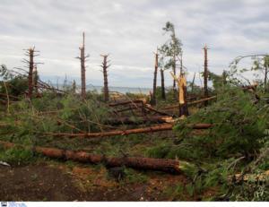 """Χαλκιδική: Το θρίλερ της ζωής τους – """"Έπεφταν δέντρα στο σκοτάδι – Πατέρας και γιος πέθαναν αγκαλιασμένοι""""!"""