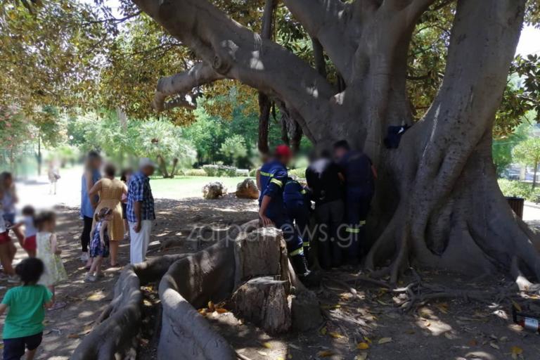 Χανιά: Παιδάκι παγιδεύτηκε σε δέντρο – Σφήνωσε το πόδι του! [pics]