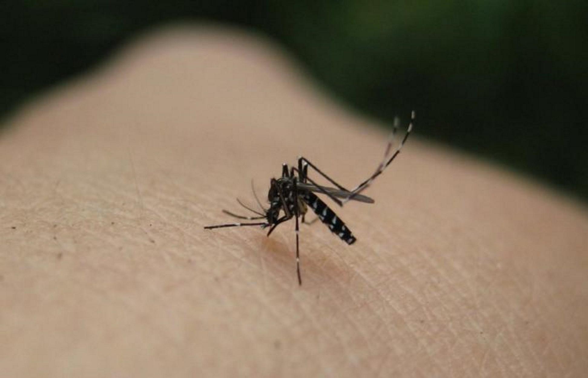 Πέντε νέα κρούσματα του ιού του Δυτικού Νείλου στην Ελλάδα!