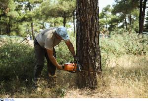 Οργή για τους κλέφτες ξυλείας στο Σέιχ Σου