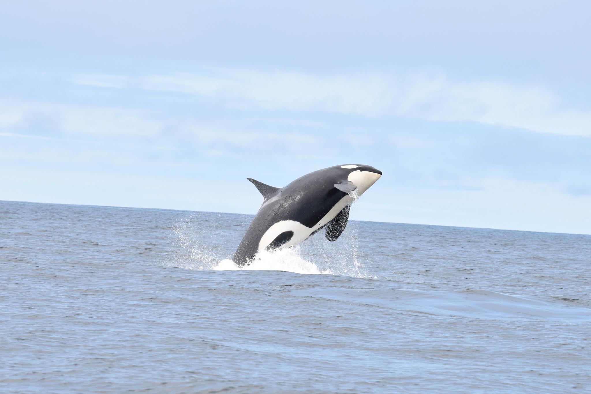 Αφαίρεσαν 40 τόνους πλαστικό από τον ωκεανό και συνεχίζουν…!