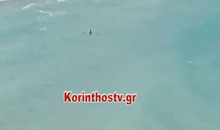 Κορινθία: Έκλεψε την παράσταση στην παραλία με τα νάζια της – Οι επίμαχες εικόνες στα Ίσθμια – video