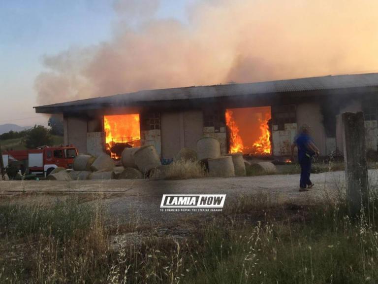 Φάρσαλα: Φωτιά σε αποθήκη κατέστρεψε τα πάντα [pics]