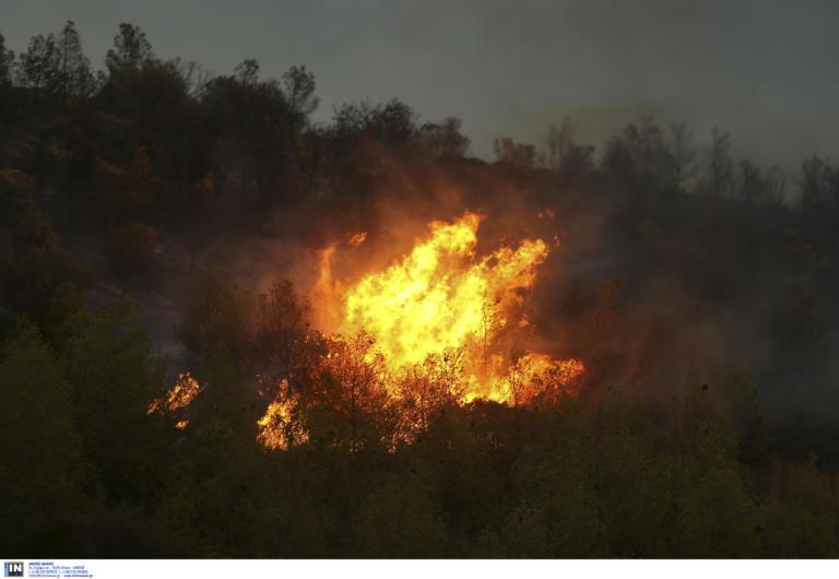 Δύσκολη η νύχτα με την φωτιά στον Κιθαιρώνα – Ενισχύθηκαν οι δυνάμεις της πυροσβεστικής