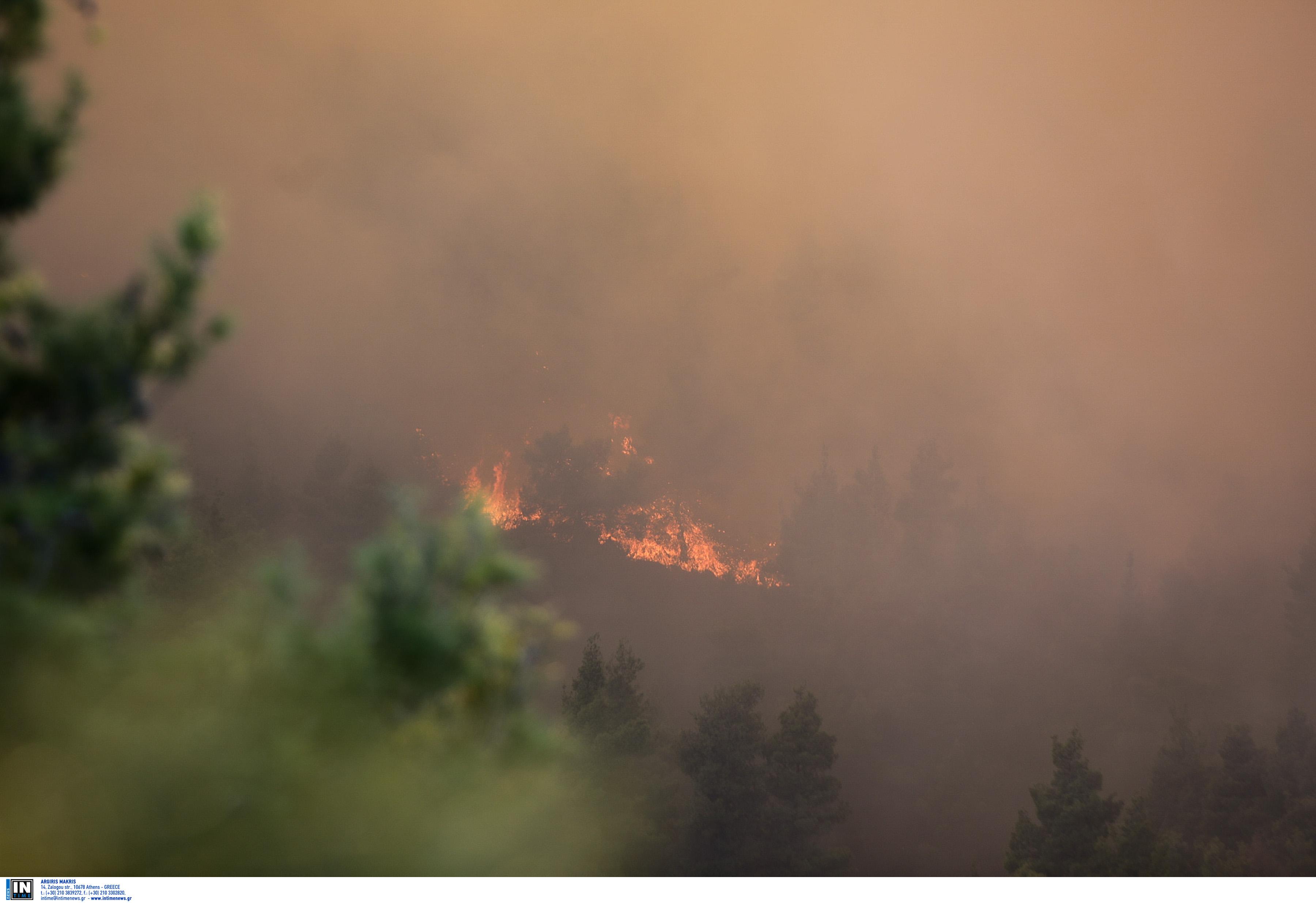 Φωτιά στην Κάρυστο – Ισχυρές δυνάμεις επί τόπου