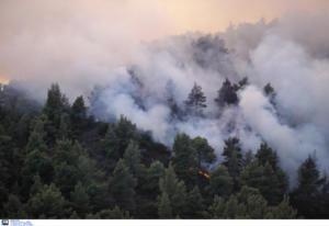 Φωτιά τώρα σε περιοχή της Λάρισας