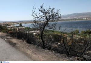 Φωτιά στα Μέγαρα: Τέθηκε υπό μερικό έλεγχο
