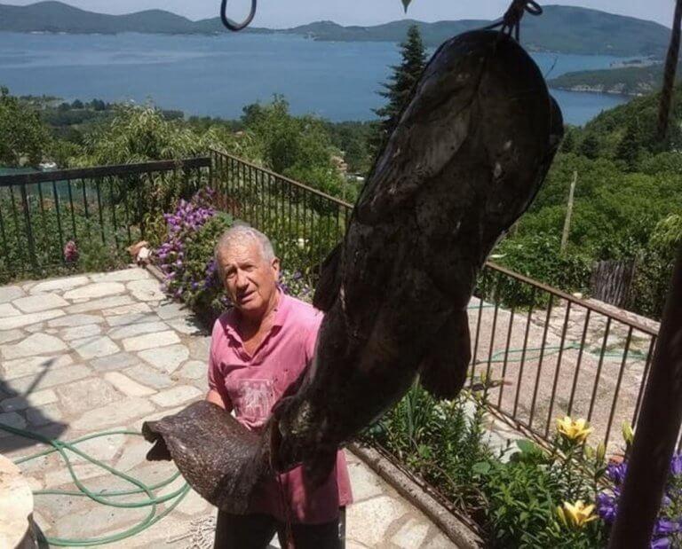 Καρδίτσα: Ανάμεσα στα κλαδιά του βυθού ένας γουλιανός 70 κιλών – Βγήκε με «τρόπαιο» από τη λίμνη Πλαστήρα [pics]