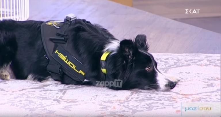 Το σκυλί που κέρδισε την καρδιά της Τατιάνας Στεφανίδου!