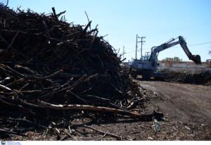 Μάτι: Άρχισε ο καθαρισμός του οικοπέδου με τους 20.000 τόνους καμμένων [vid]