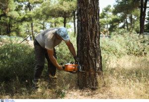 Σέιχ Σου: Προχωράει η αποψίλωση της έκτασης με το φλοιοφάγο έντομο
