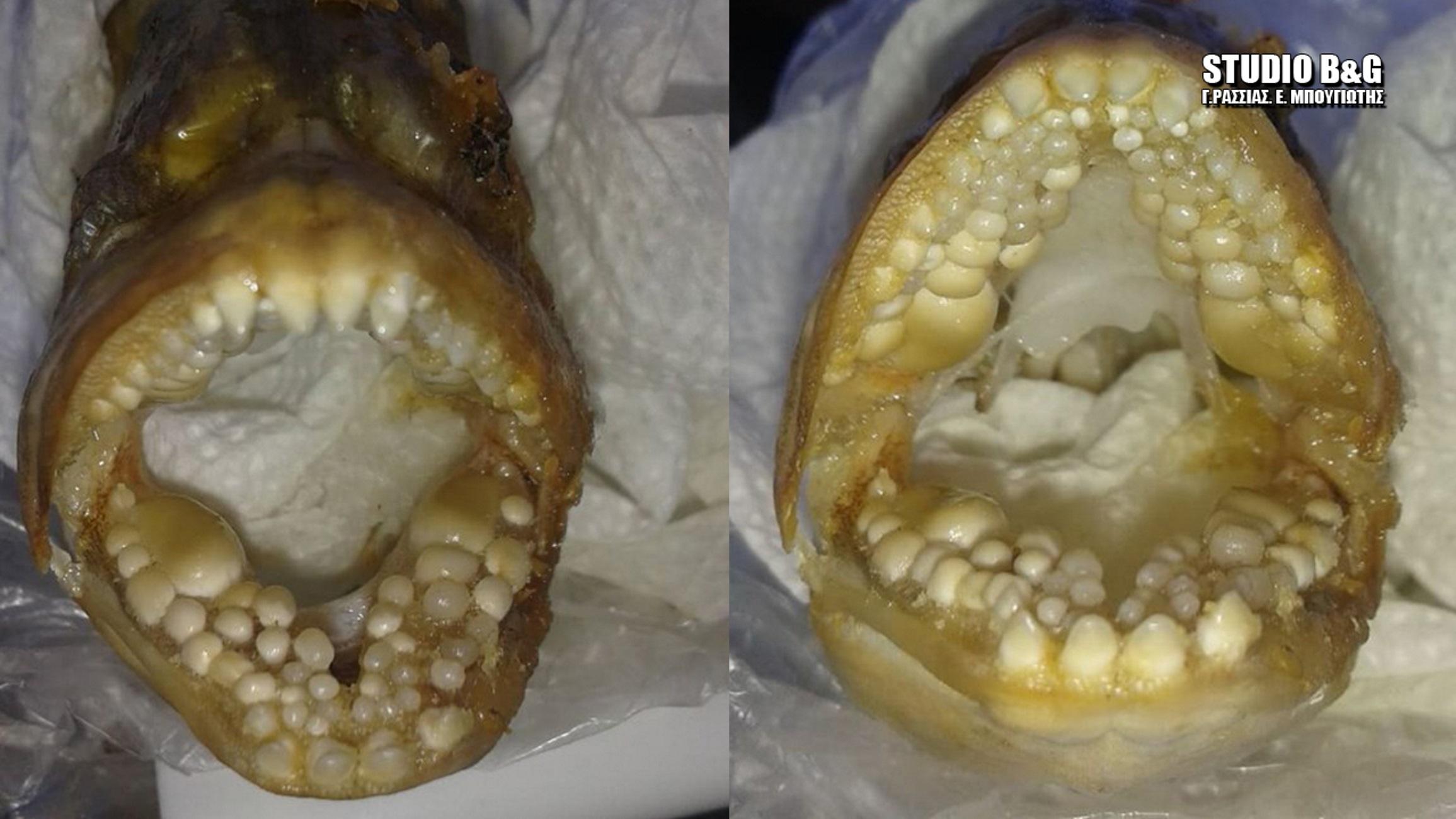Αργολίδα: Δάσκαλος έπιασε αυτό το ψάρι – Άνοιξε το στόμα του και έμεινε στήλη άλατος [pics]