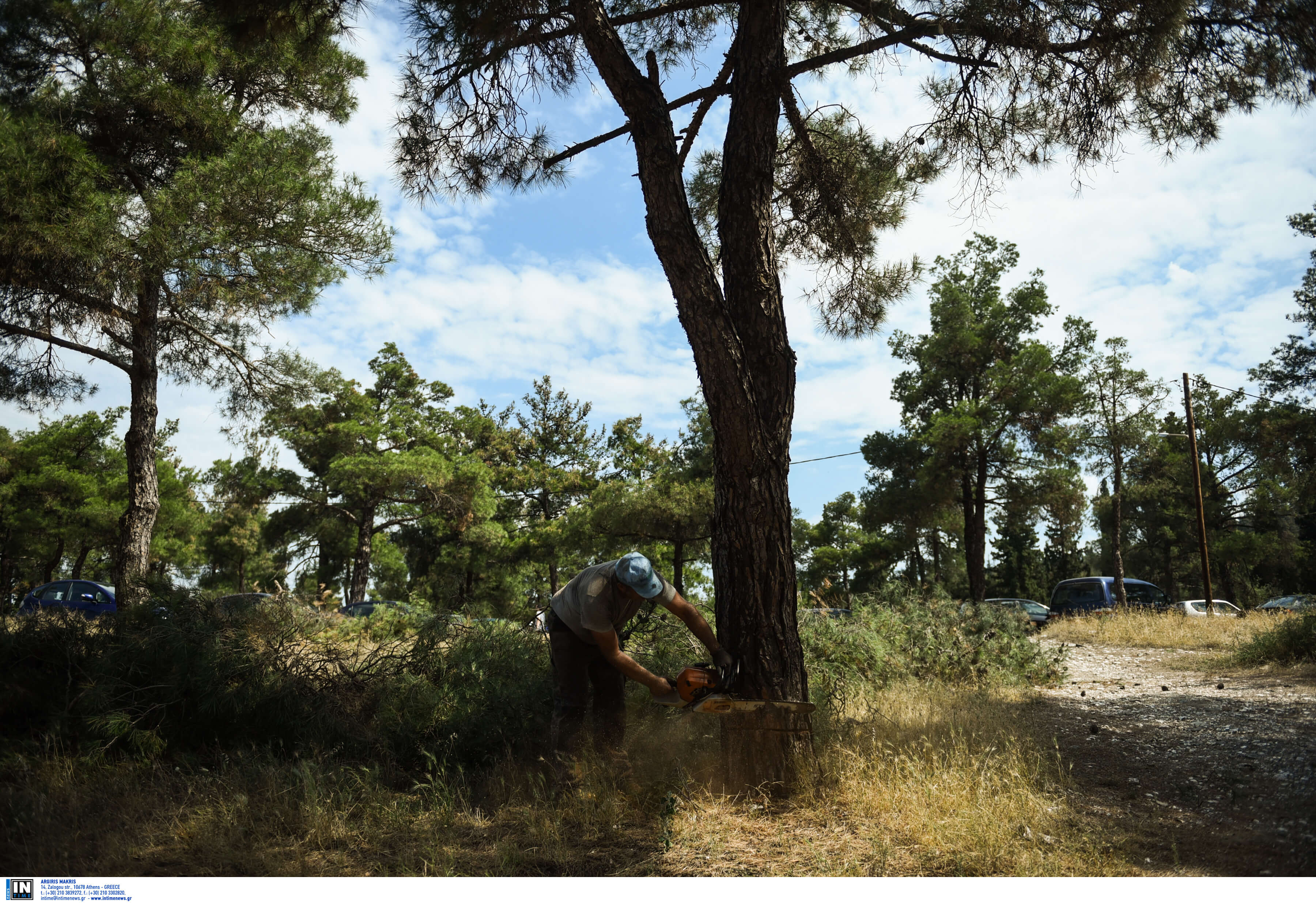 Θεσσαλονίκη: Αυτοί θα είναι οι νέοι «φρουροί» στο δάσος του Σέιχ Σου
