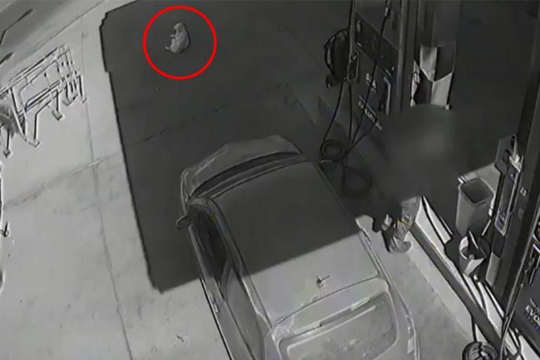 Χανιά: Η στιγμή που αυτοκίνητο πατάει και σκοτώνει σκύλο σε βενζινάδικο – Οργή για την οδηγό – video