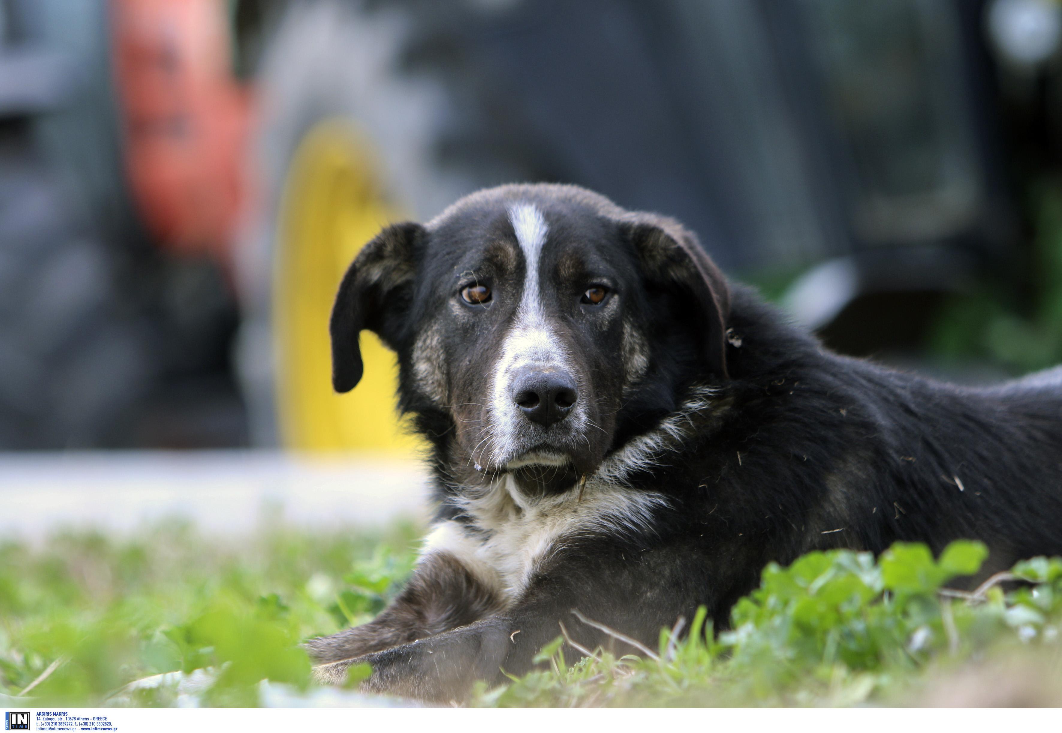Θεσσαλονίκη: Στο νοσοκομείο 20χρονος μετά από επίθεση αδέσποτου σκύλου!