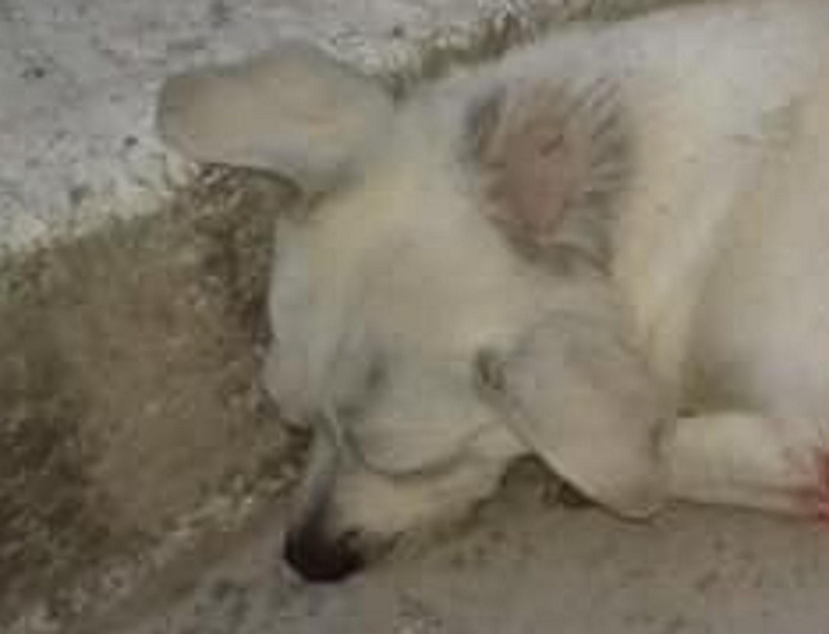 Κέρκυρα: Σκότωσε τον σκύλο επειδή πήγε να ζευγαρώσει – Οργή μετά τις σκληρές εικόνες!