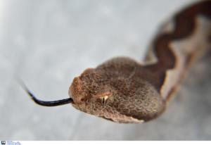 Απίστευτο! Άνδρας δάγκωσε φίδι και το… σκότωσε