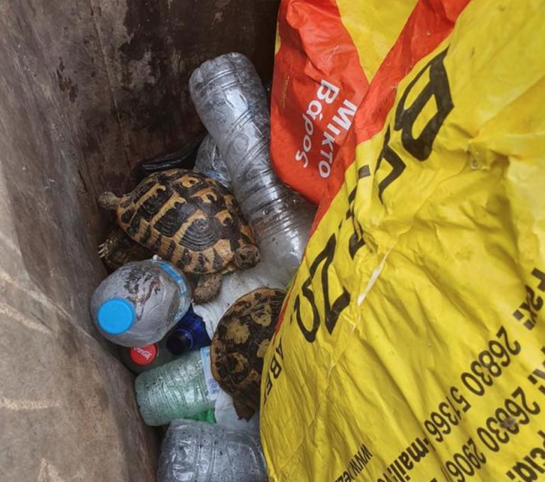 Θεσπρωτία: Κτήνη πέταξαν ζωντανές χελώνες σε κάδο σκουπιδιών