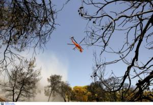 Φωτιά στη Λαμία – Συναγερμός στην Πυροσβεστική