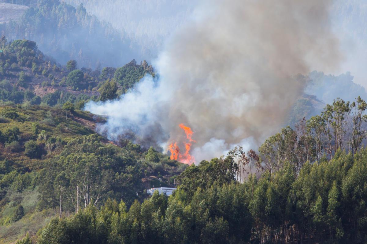 Πυρκαγιά - Κανάρια