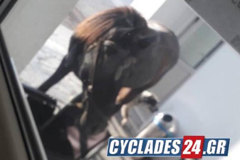Νάξος: Ένα άλογο μπήκε για check in στο αεροδρόμιο!