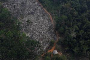 Ραγδαίες εξελίξεις με το τροπικό δάσος του Αμαζονίου στη Βραζιλία!