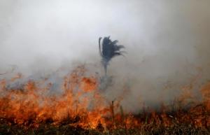 Οικολογική τραγωδία χωρίς τέλος στον Αμαζόνιο – Εκατοντάδες νέες φωτιές