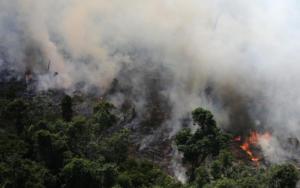 Η Ιρλανδία θα μπλοκάρει την συμφωνία του ελεύθερου εμπορίου αν δεν προστατευτεί ο Αμαζόνιος