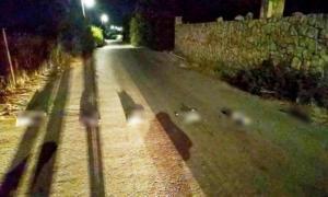 Μεσαίωνας στην Κρήτη! Σκότωσαν γάτες και τις έβαλαν στην σειρά! Σκληρές εικόνες