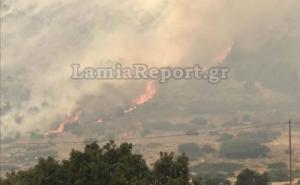 Μαίνεται η φωτιά στους Δελφούς – Απειλείται ο Εθνικός Δρυμός του Παρνασσού [pics]